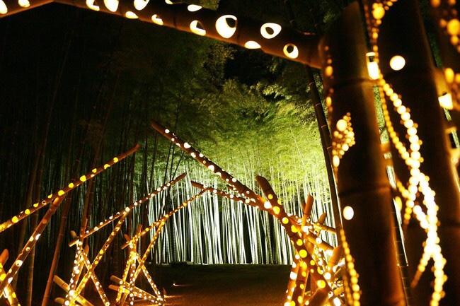 若竹の杜 若山農場のライトアップ