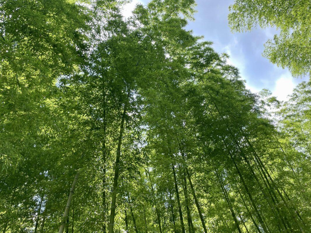 若竹の杜 若山農場の竹林散策